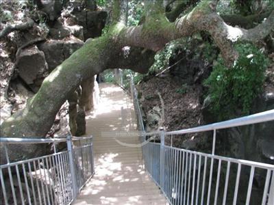 שמורת הבניאס הגשר התלוי