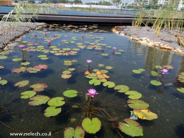 האגם האקולוגי והפארק הגדול בפתח תקווה