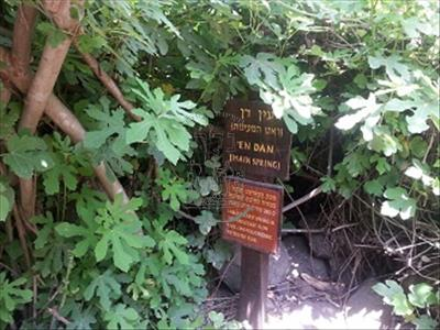 שמורת תל דן