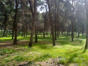 יער קולה
