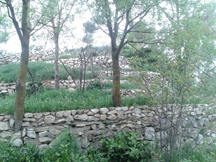 גן המצודה בצפת