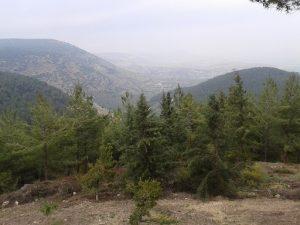 דרך נוף יער ביריה