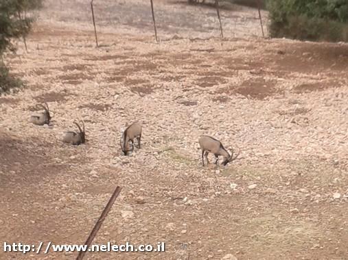 חי בר כרמל