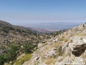 הר חבושית